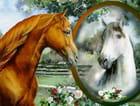 Oh! Mon beau miroir...