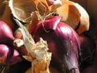 Oignons violets