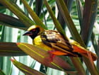 Oiseau à la Réunion