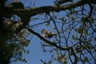 oiseau songeur