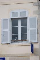 oiseaux à la fenêtre