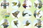 Oiseaux à la mangeoire