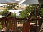 oiseaux au Sine Saloum