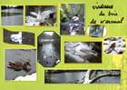 Oiseaux de l'étang de Keroual