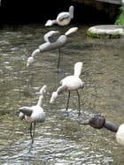 Oiseaux de pierre