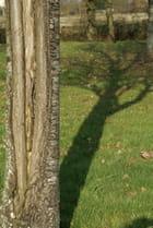 Ombre arboricole