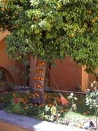Oranger mexicain