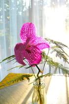 orchidée matinale