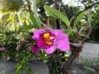 Orchidées (1)