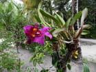 Orchidées (2)