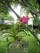 Orchidées (6)
