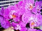 Orchidées et moi