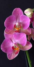 Orchidées (mode B (Bulb)