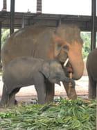 Orphelinat des éléphants