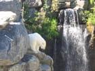 Ours polaire - Zoo de St-Félicien au Lac St-Jean