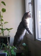Pacha observe les oiseaux