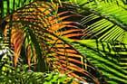 Palmier en feu