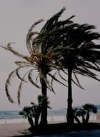 Palmier en hiver