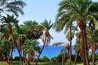 Palmiers-dattiers devant la Mer Rouge