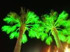 Palmiers en folie
