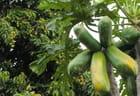 Papayes et letchis