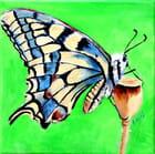 Papillion butineur