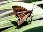 Papillon dans crocus