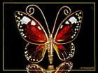 Papillon de verre...