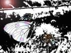 Papillon-lumière 4