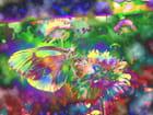 Papillon-lumière 6