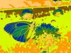 Papillon-lumière 8