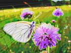 Papillon-lumière 9
