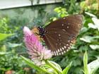 Papillon Naturoscope Honfleur