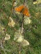 Papillon sur arbuste