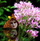 papillon vénitien