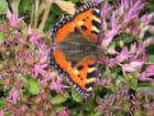 Papillon vivant