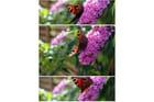Papillons en septembre