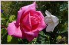 Papotage entre fleurs