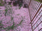 Par-terre fleuri