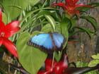 Parc à papillons de Vannes