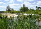 Parc zoologique de Paris - Les roseaux