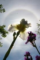 Parhélie Iris