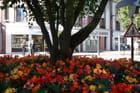 Parterre de bégonias dans le centre ville