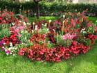 Parterre de fleurs (1)