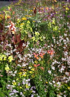 Parterre de fleurs dans le parc