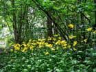 Parterre de fleurs en sous-bois