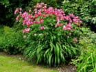 Parterre de fleurs parc floral la colline aux oiseaux