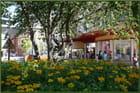Parterre de rudbeckias dans le centre-ville