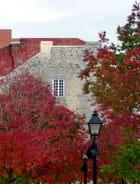 Parure d'automne à Montréal