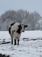"""Paysage d""""hiver"""